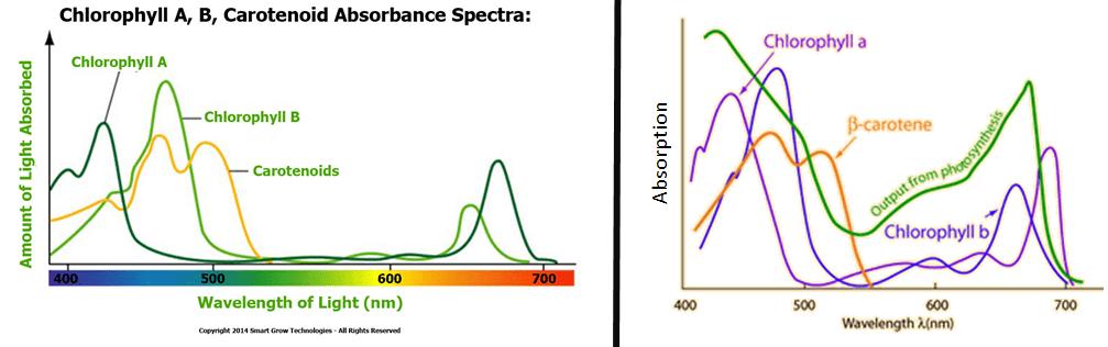 Action Spectrum Green Plants