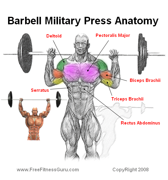 Military Press Works What Muscles