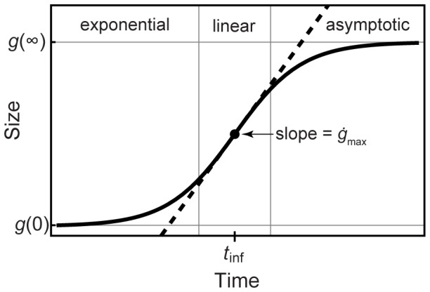 Biological Growth Curves