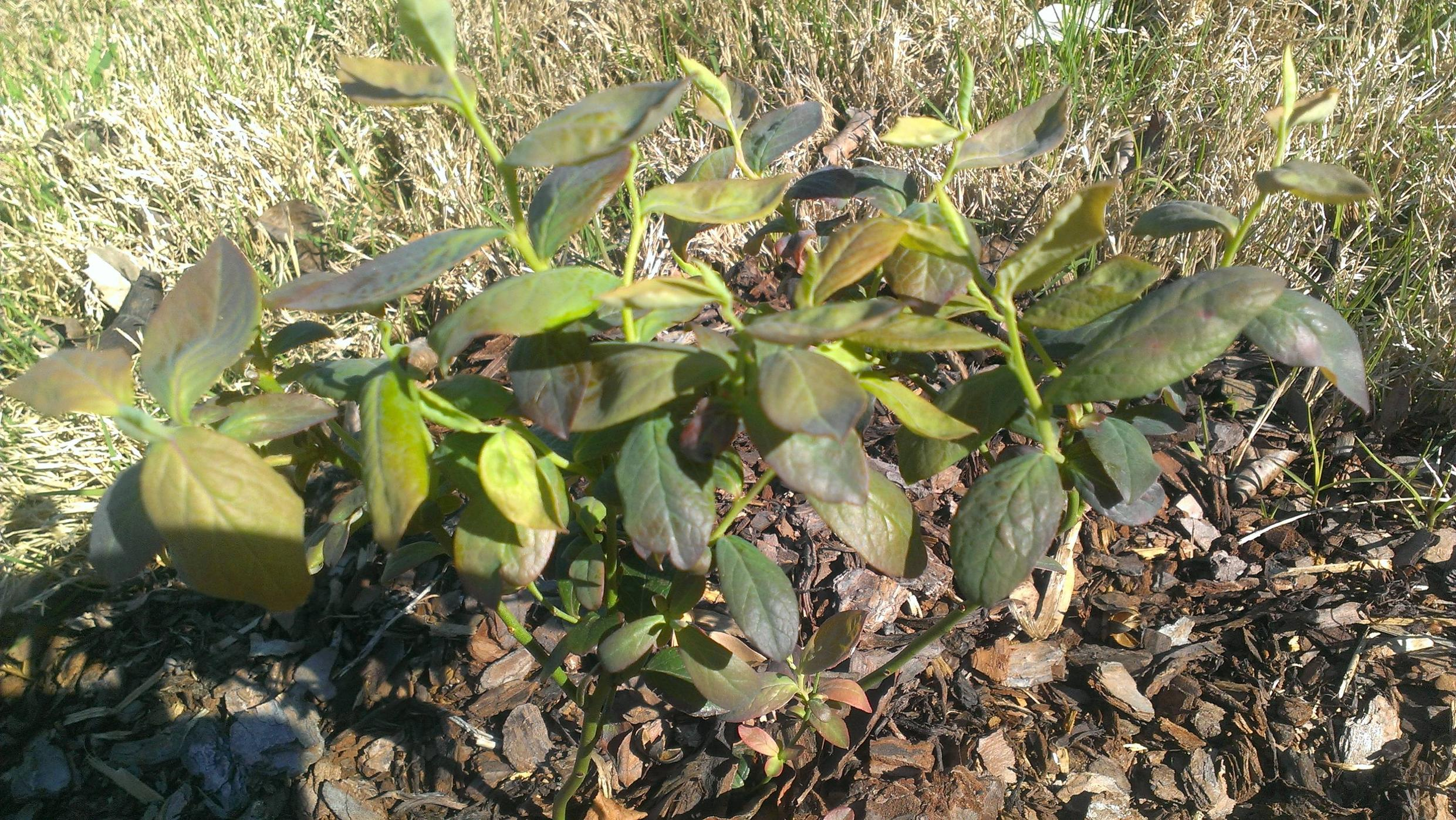 Acid Soil Loving Plants