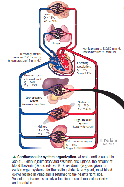 Heart Blood Flow Diagram With Lungs