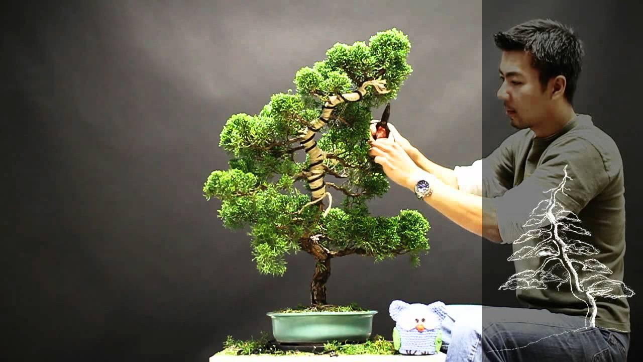 Bonsai Redesign Juniperus Chinensis Xi Youtube