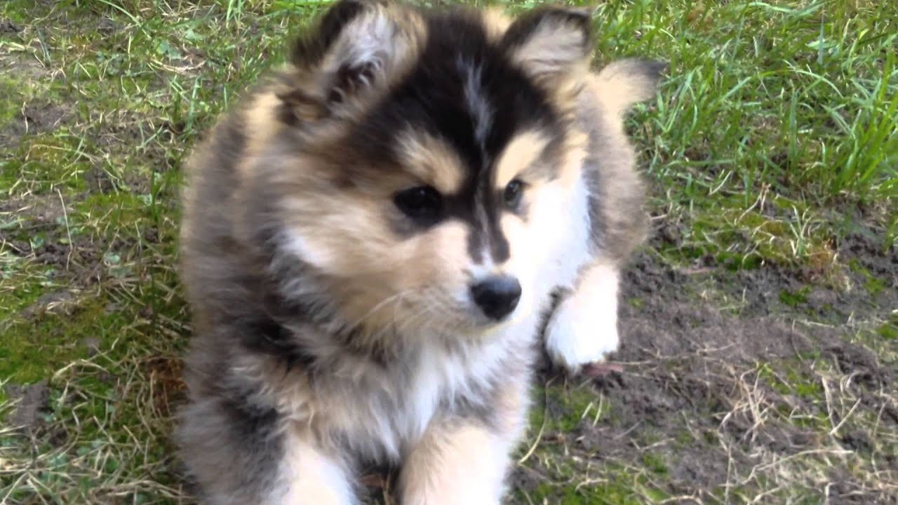 Heisenberg the cutest puppy ever! #2 - YouTube