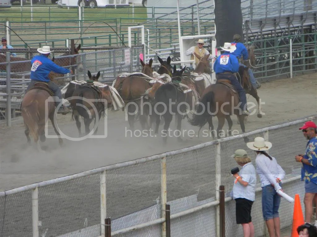 Bishop Mule Days Pic Heavy Horsetopia Forum
