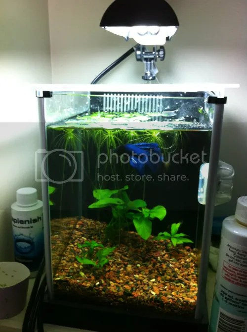 Frogbit Plant Care