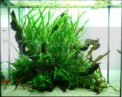 Daize's 120L island aquascape | UK Aquatic Plant Society