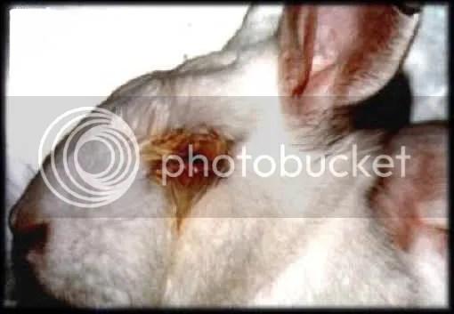 Fresh Cosmetics Test Animals