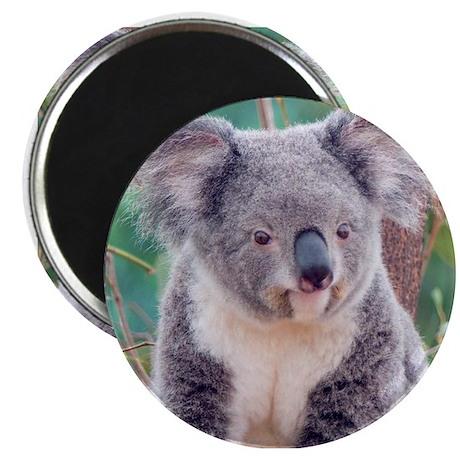 SMILING KOALA BEAR Magnet by bostonart