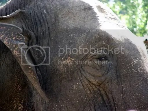 Elephant Sanctuary Tennessee Homepage
