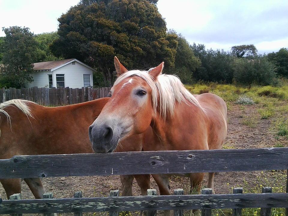 animal ranch - 950×713