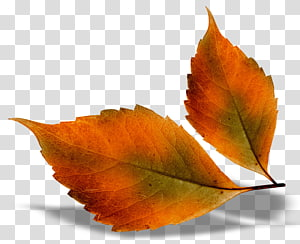 fall leaves png # 15