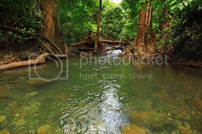 The Amazing Forests of Andaman in Pictures ~ The Wandering ...
