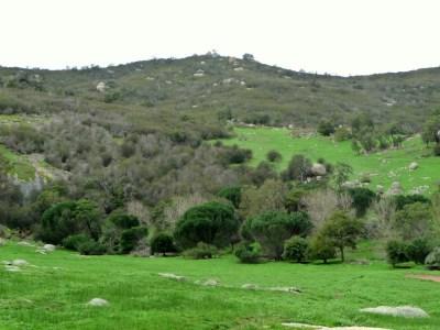 Burgan in the southern Strathbogie Ranges – Strathbogie ...