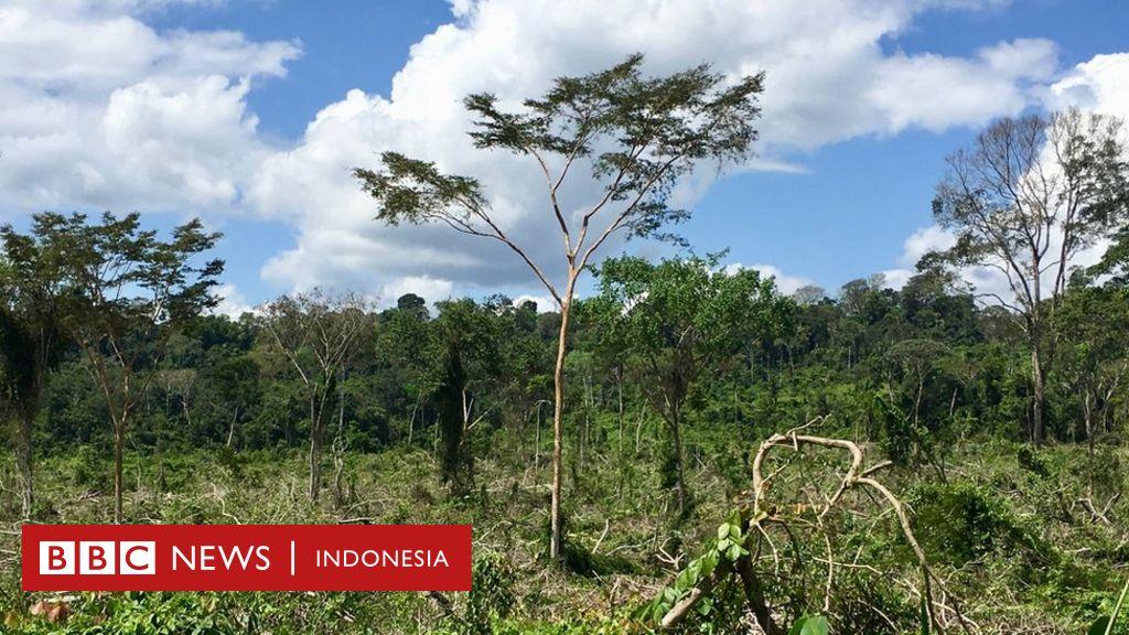 amazon rainforest location - 1024×576