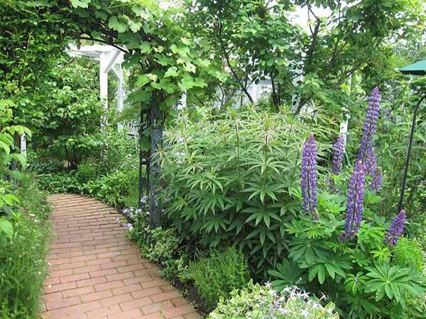 花园和花园设计用自己的手照片