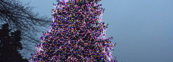 Toledo Zoo Membership Lights Christmas