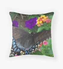 Zulily  Home Decor   Redbubble Black Swallowtail  Papllio polyxenes  If you like  purchase  try a cell  phone