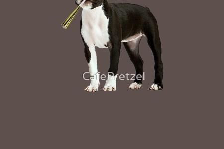 Boston Terrier Birthday 4k Pictures 4k Pictures Full Hq Wallpaper
