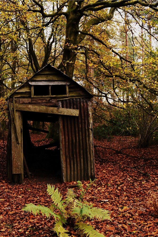 Quot Old Shed In The Woods Quot By Ms Bexy Redbubble