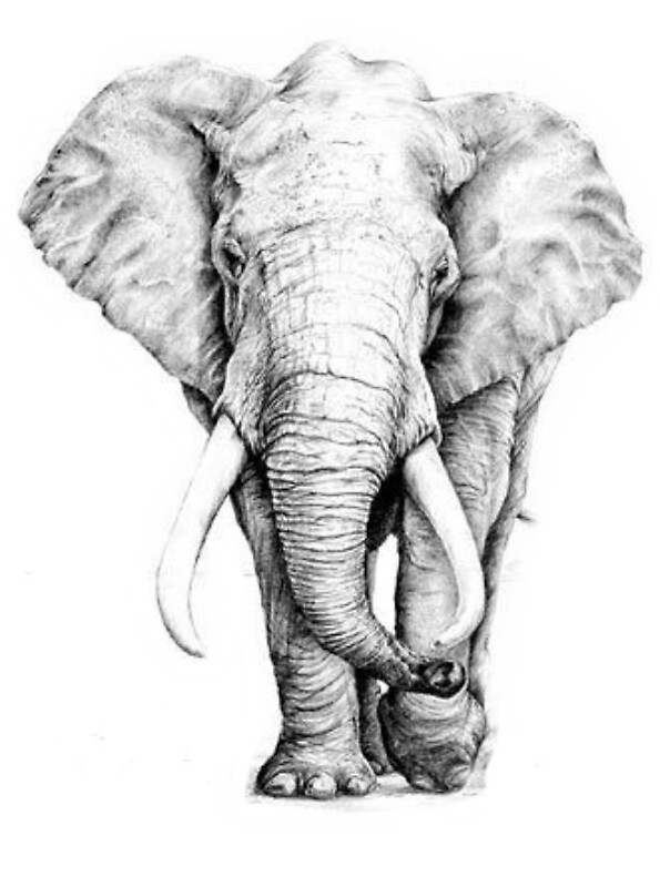 Drawings Elephant Creative