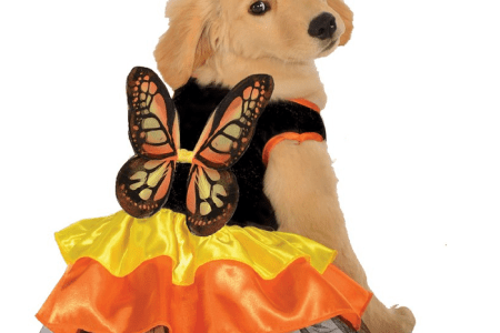 dinosaur dog costumes source cute small dog halloween costumes 4k pictures 4k pictures full