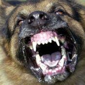 Dünyanın En GÜÇlÜ 10 Köpek Irkı (4)