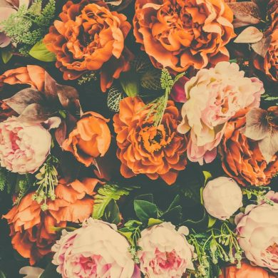 Floral background with orange and pink flowers Photo   Free Download Floral background with orange and pink flowers Free Photo