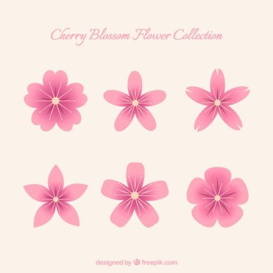 Cute set of cherry blossom flowers Vector   Free Download Cute set of cherry blossom flowers Free Vector