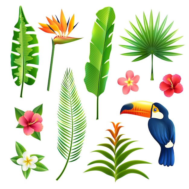 Coconut Tree Vectors Photos And Psd Files Free Download