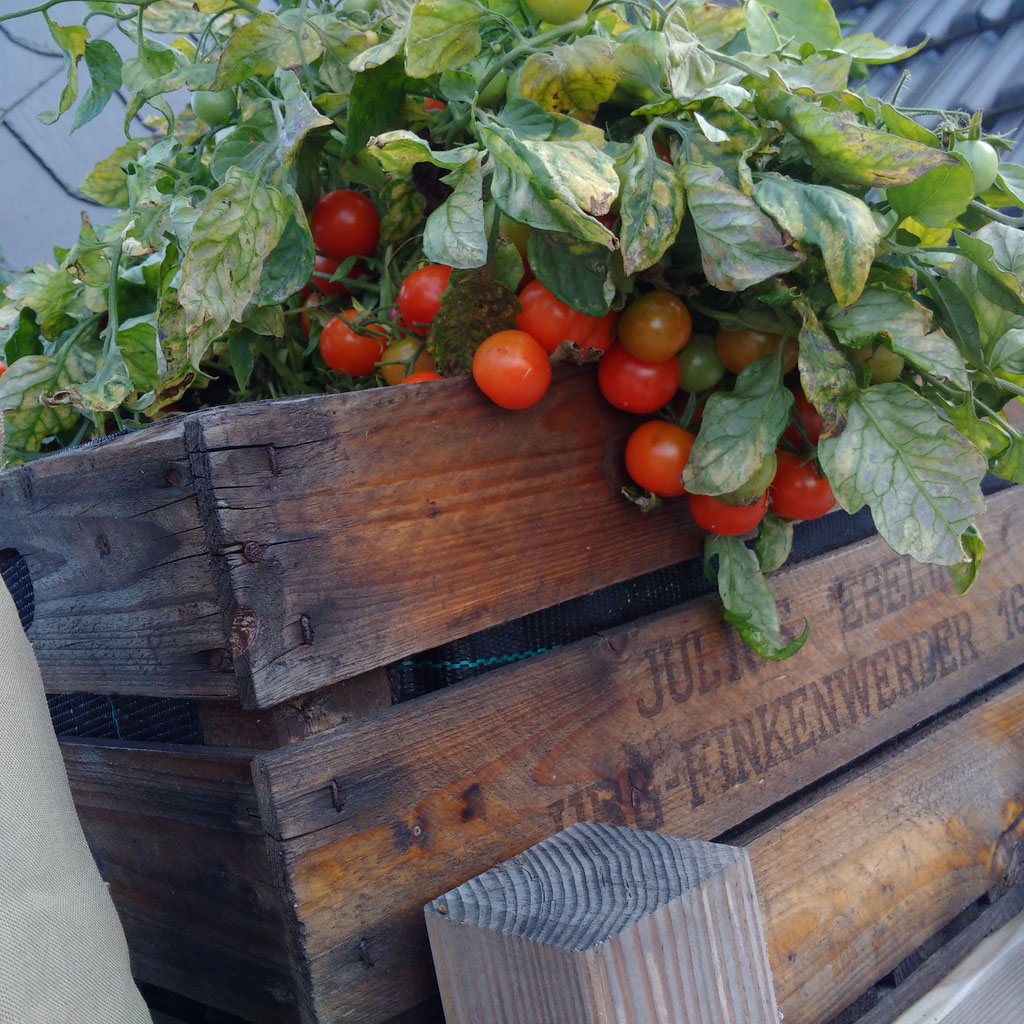 Geeignete Gefäße für den Gemüseanbau - erntefibel.de