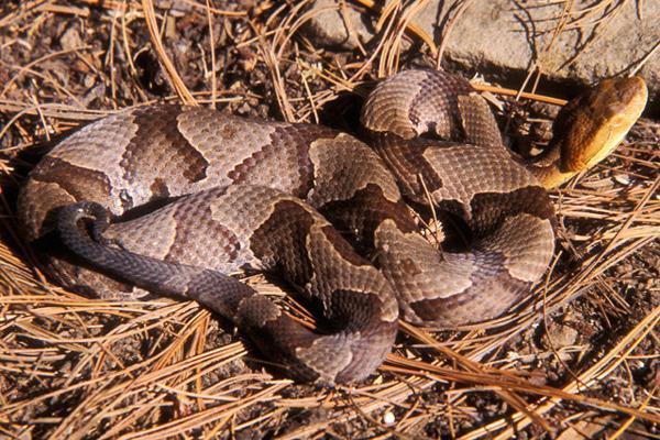 Man bitten by snake on Appalachian Trail seeks help at ...
