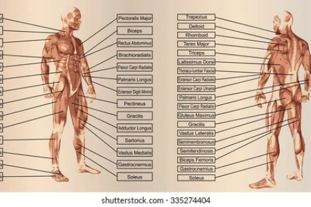 interior men s lower anatomy » Electronic Wallpaper | Electronic ...