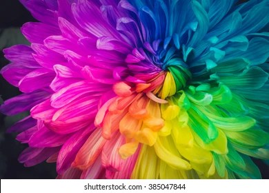 Rainbow Flower Images  Stock Photos   Vectors   Shutterstock Beautiful flowers background