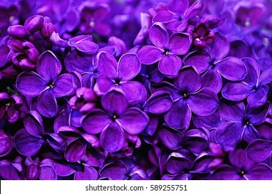 Violet Flower Images  Stock Photos   Vectors   Shutterstock Flower background   lilac flowers in spring garden