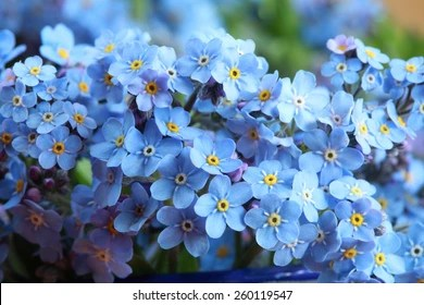 Forget me not Images  Stock Photos   Vectors  10  Off    Shutterstock Forget me nots