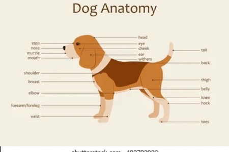 Interior Internal Anatomy Dog Full Hd Maps Locations Another