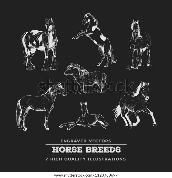 realistic horse breeds # 25