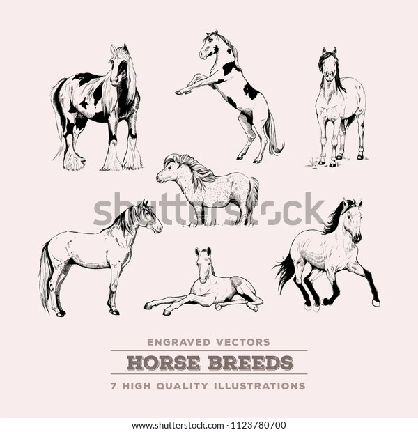 realistic horse breeds # 40