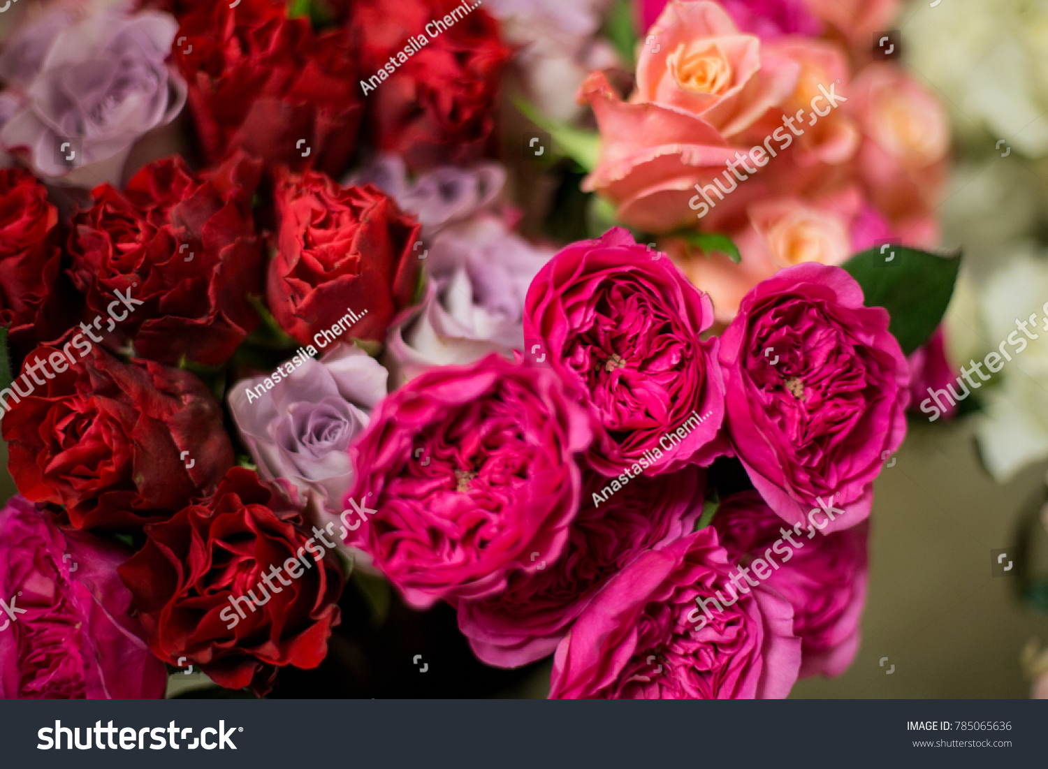 Elegant and beautiful garden pink roses Baronesse   EZ Canvas ID  785065636