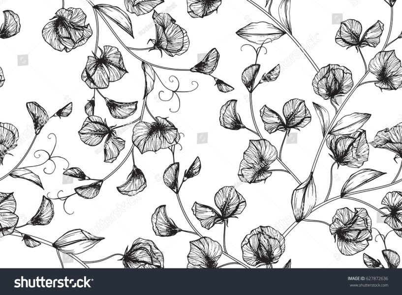 Seamless Pattern Sweet Pea Flowers Drawing Stock Illustration     Seamless pattern sweet pea flowers drawing and sketch with line art on  white backgrounds