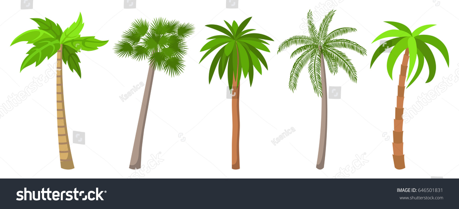 Canary Date Palm Tree Pricing