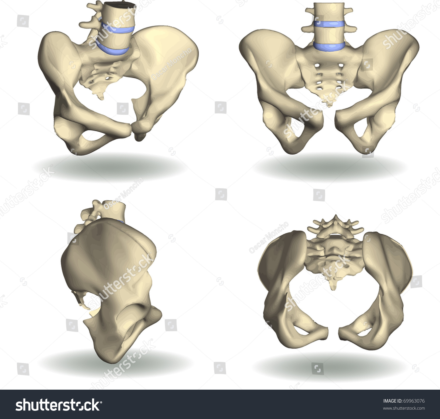 Vector Pelvic Area Four Different Positions Stock Vector ...