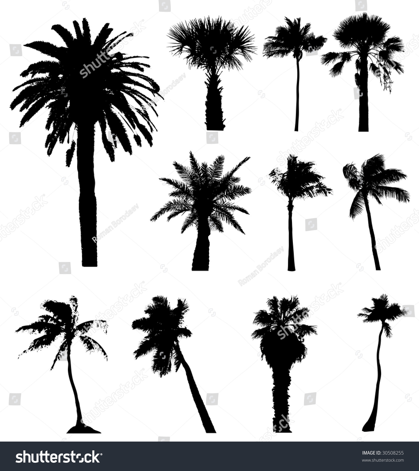 Vector Palm Tree Palmtree Silhouette Set Stock Vector 30508255 Shutterstock