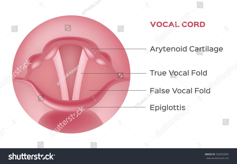 Prostatic Fossa Anatomy