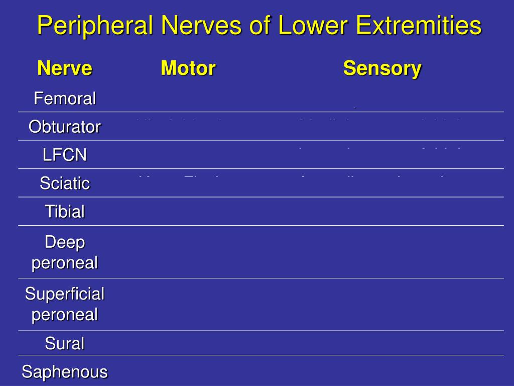 Lower Extremity Dermatomes And Myotomes