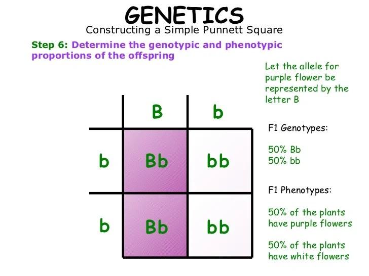 01 mendelian genetics