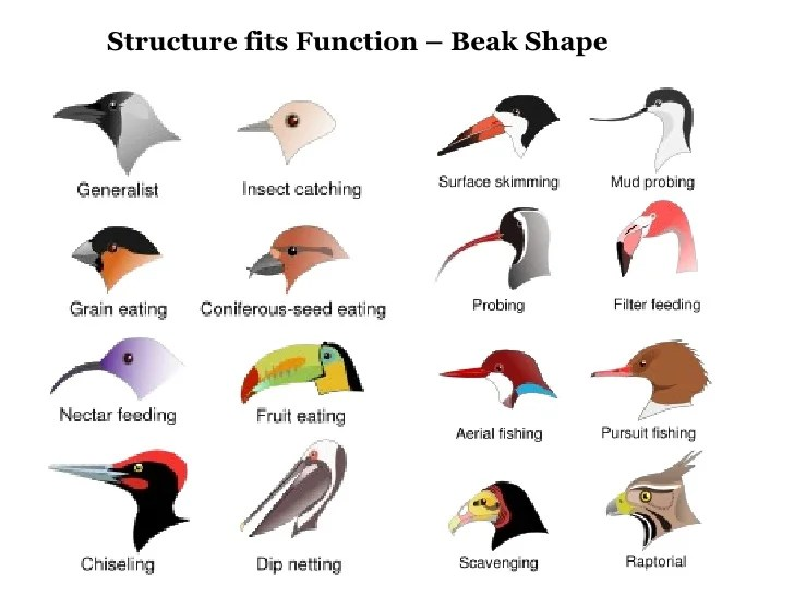 Shape Islands Galapagos Chart Finches And Beak Head