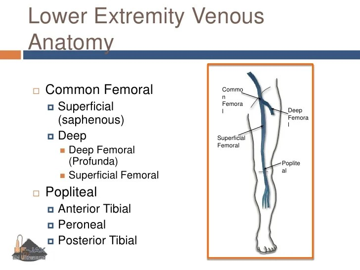 Lower Extremity Venous Ultrasound Worksheet