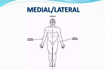 Interior Inferior Anatomical Position Full Hd Maps Locations