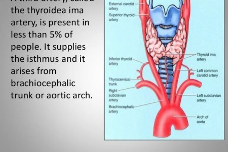 interior inferior parathyroid gland location » Full HD MAPS ...
